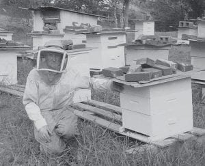 BEEKEEPER -  Harold Mullins, a beekeeper, will sell his honey at the second annual Indian Summer Folk Festival at the Little Shepherd Amphitheatre site in Jenkins on October 5, 6 and 7. He is pictured at his apiary in Jenkins.