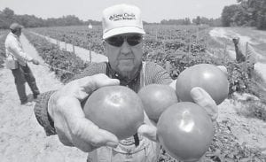 Farmer Robert Dodd displays some of his tomato crop at his farm in Hanover County, Va. As salmonella cases continue to climb, the government is checking if tainted tomatoes really are to blame for the record outbreak. (AP Photo)