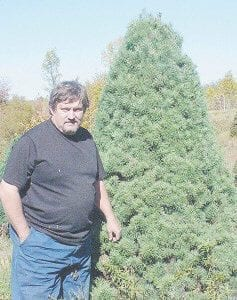 CHRISTMAS TREES — Jack Looney stands beside one of the Christmas trees that is ready to send to market. He has approximately onehalf million trees planted on an area that was previously surface mined. The ideal height for a Christmas tree is eight feet.