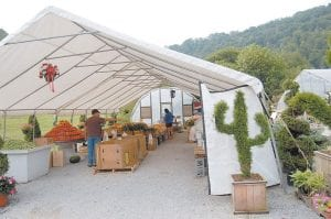A shrub similar to the one pictured above at right was stolen at 1:31 a.m. on August 5 at the Golden Apple fruit and vegetable market at Ermine. The six-foot tall shrub is pr uned to look l ike a cactus and is pric ed at $400.