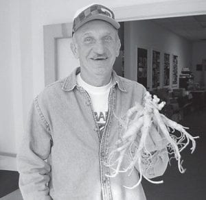 Joe Morris, 70, of Mayking, found four three-prong tops on a ginseng root near Pine Mountain on Oct. 21. He said it is the largest ginseng root he has ever found.