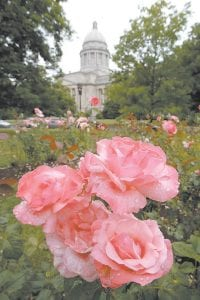 Raindrops lingered on the petals of roses in the rose garden at the Capitol after morning rains in Frankfort. (AP Photo/Ed Reinke)