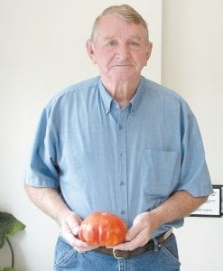 GIANT TOMATO — In a year when tomato growers aren't having much success locally, this Turkey Creek tomato was grown by Matthew Eldridge of Sandlick, who has a small garden with peppers, cabbage, and beans. He has been gardening for 48 years. The tomato plant was purchased at Dry Fork Market.