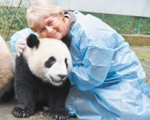 Connie Hall Fields realized the dream of a lifetime when she was able to travel to China earlier this fall to help care for giant pandas, as seen in photos above and below.