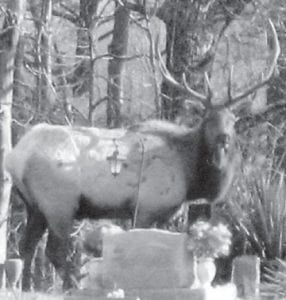 ELK SIGHTING — Students at Mayking Head Start recently enjoyed viewing an elk which was standing in Webb Cemetery beside the school.