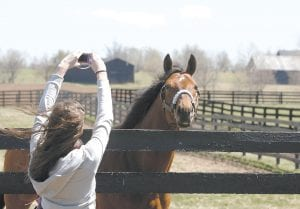 Jennifer Riggle of Huntington, Ind., raised her camera last week to photograph Big Brown in a paddock at the Three Chimneys Farm in Midway, Ky. Sleek thoroughbreds are the stars in Kentucky's bluegrass region, and there's no better time to visit than spring. (AP Photo/Ed Reinke)
