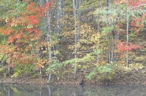 — Some colorful leaves are still hanging to their trees as the fall leaf season winds down in Letcher County. This photo was taken beside a pond near Mayking.