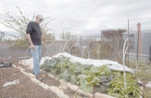 Dr. Dewayne Nash checks out his garden at his home in Bertram, Texas. Nash, a family physician, is diagnosed with Alzheimer's disease. (AP Photo/Austin American-Statesman)