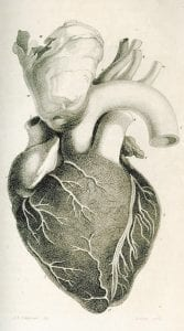 This illustration showing a diagram of a human heart appeared in an 1812 issue of the journal.
