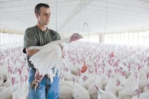David Martin is shown with his turkeys raised without the use of antibiotics at his farm in Lebanon, Pa. The Food and Drug Administration has called on drug companies to help limit the use of antibiotics in farm animals, a decades-old practice that scientists say has contributed to a surge in dangerous, drug-resistant bacteria. (AP Photo)