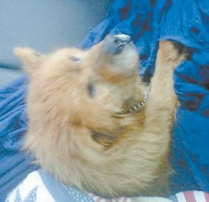 Pooh Bear, 15, was reunited with his owner after his rescuer placed in ad in The Mountain Eagle.