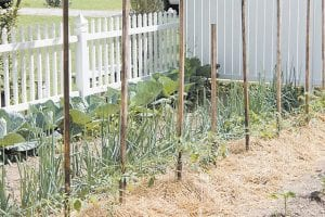 This beautiful garden is being grown at the home of Kendall and Carol Ison on Big Cowan.