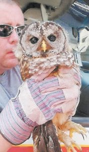 Wallace 'Spanky' Bolling, Jr. holding the owl.