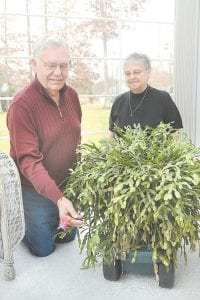 Glen and Nellie Blankenship looked over their 80-year-old Christmas cactus in Beckley, W.Va., recently. (The Register-Herald, Rick Barbero)