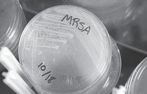 Plates of methicillin-resistant Staphylococcus aureus (MRSA) are seen in the Center for Disease Control's healthcare-associated infections laboratory. A recent study of hospitals found that decontaminating all intensive care patients by using antiseptic wipes and giving them an antibiotic nose ointment dramatically reduced bloodstream infections from germs that include MRSA. (AP Photo/Center for Disease Control)