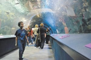 Nine-year-old Anaiah Jalloh of Columbus, Ohio, looked through a glass tunnel at sharks and other sea creatures during a recent visit to the Newport Aquarium in Newport, Ky. The aquarium, across the river from Cincinnati, remains a top tourist attraction as it turns 15 this month. (AP Photo/Dylan Lovan)