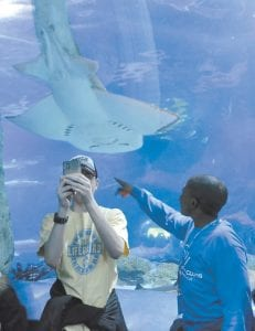 """A visitor attempted to take a """"selfie"""" with a shark ray at the Newport Aquarium recently. (AP Photo)"""