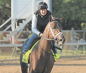 KENTUCKY DERBY PICK — Sports columnist Bob Watkins has picked Carpe Diem as his favorite to win the Kentucky Derby. (AP)