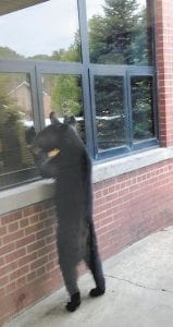 This photo of a black bear looking through a window at Fleming-Neon Middle School last Thursday is being circulated on Facebook. The bear left its paw prints on the cafeteria windows.