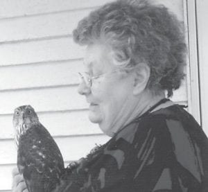 This chicken hawk flew into a window at the home of Letha Dollarhyde, who cuddled the dazed, confused bird until it was able to fly away.