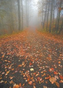 — An early morning fog envelopes much of the Little Shepherd Trail atop Pine Mountain near Whitesburg. (Photo by Thomas Biggs)