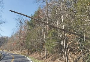 A rotten tree is held in place by a cable on U.S. Highway 119 near Partridge. (Eagle photo)
