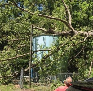 Water service to customers on the Fleming-Neon water system may have to be disrupted after this tree is removed from the system's main storage tank.