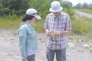 GREEN FORESTS WORK operations director Mike French and reforestation coordinator Kylie Schmidt recently examined the bloom from an Allegheny chinkapin tree growing on a former strip mined site at Jent Mountain near Carcassonne.