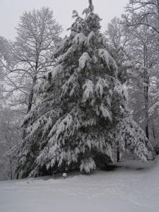 Lee Anna Mullins snapped this photo of a snow-covered tree near Mountain View Avenue in Whitesburg.