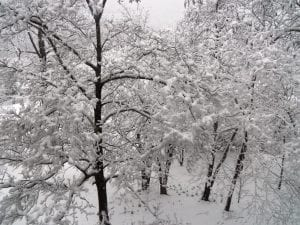 Lee Anna Mullins submitted this photo of snow-covered trees near Mountain View Avenue in Whitesburg.