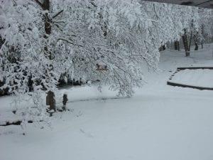 Lee Anna Mullins took this photo near Mountain View Avenue in Whitesburg.