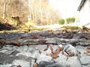 Sasha Engle, of Sandlick, took this photo at her home on Nov. 8.