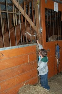 Mark Howard looked at a horse.