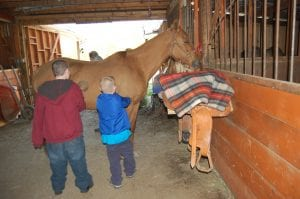 Alex Davis and Matthew Wilder brushed a horse.