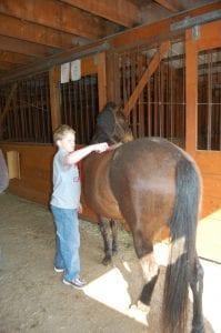 Logan Wynn brushed a horse.