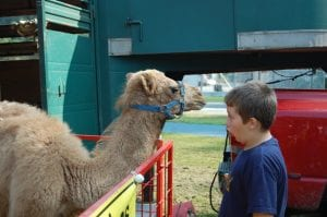 Alex Whitaker, 9, of Blair Branch, made camel noises as Archie, a four-month-old camel calf, listened intently. The petting zoo owned by Animal Enterprises in Sadieville was a popular attraction at the Letcher County Kids' Day Back to School Bash at River Park in Whitesburg on July 29. Alex, a son of Wade and Lena Whitaker, is a third-grade student at Letcher Elementary School.