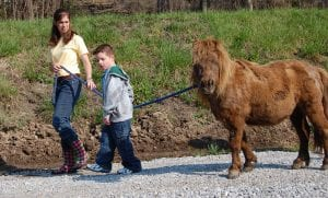 Leah Baldwin helped Mark Howard walk Cocoa, his favorite horse at the stables.