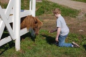 Logan Wynn fed the miniature horse.